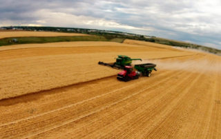 Photo provided by John Simpson of a durum crop on the Simpson Farm SE of Moose Jaw