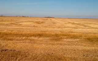 Flax crop withstood the snowfall and is now ready for harvest once it dries.