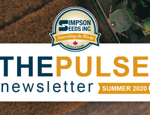 The Pulse – Summer Newsletter